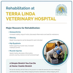 Rehabilitation at Terra Linda Veterinary Hospital