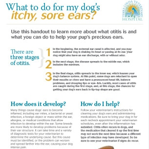 What to do for Your Dog's Sore, Itchy Ears